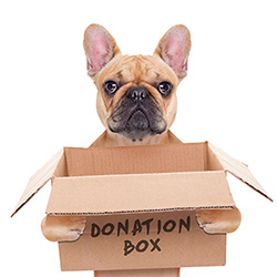 walter-joseph-group-donation-dog
